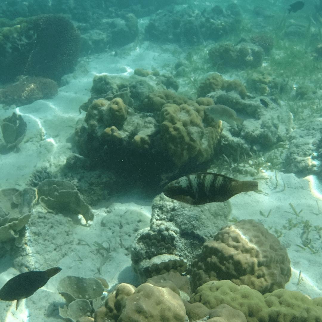 Banana-Reef-trip2flight
