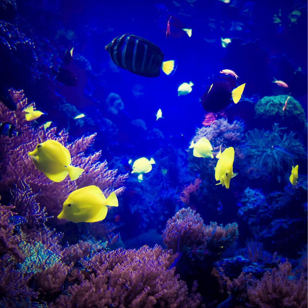 Underwater-World-trip2flight